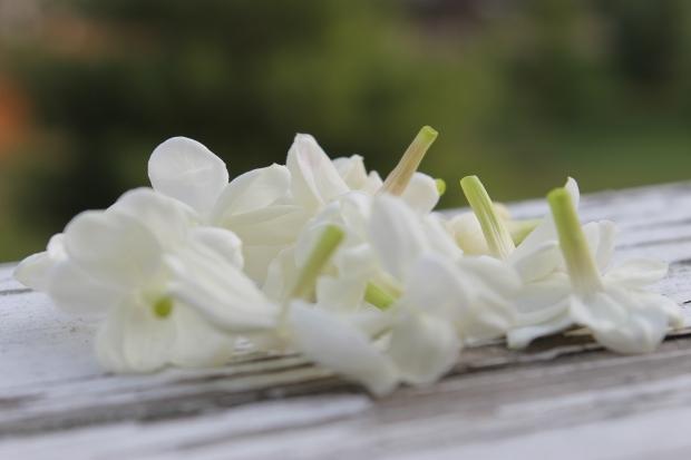 jasmine potted plants fertilizer